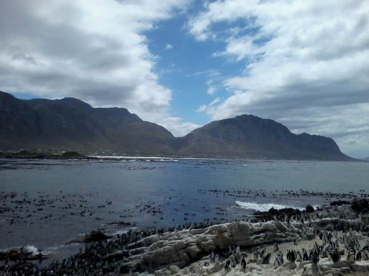 I took this photograph from my mobile and wanted to capture the penguins. Instead, the emphasis seemed to be the how the mountain and sky met. This met my amazement, as I had not noticed the beautiful blue heart space, which was the dividing factor between the clouds. Since I am an analytical and creative person, I could not but help to put my experience to paper. As I saw penguins, who have one soul mate and the 'lips' of the mountain meeting the heart in sky ... my depiction envisioned…