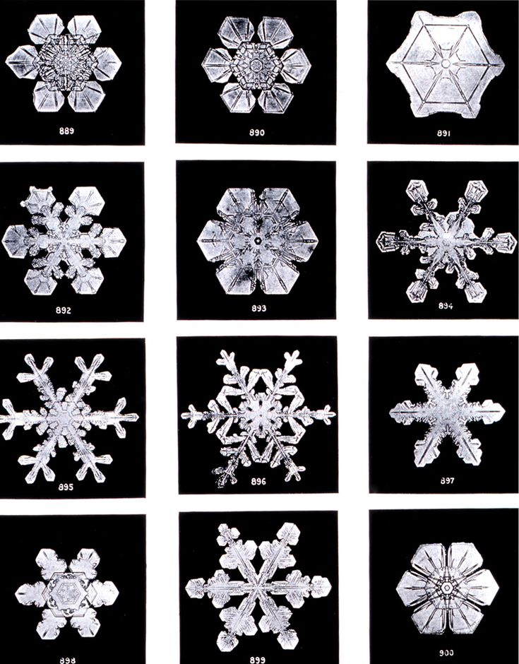 Snow flakes by Wilson Bentley. Bentley was a bachelor farmer whose hobby was photographing snow flakes. ; Image ID: wea02087, Historic NWS Collection ; Location: Jericho, Vermont ; Photo Date: 1902 Winter