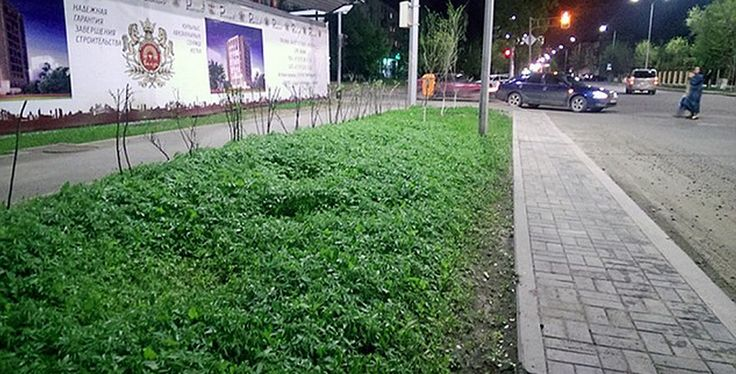 Council Launch Investigation After Weed Plants Spring Up All Over City Centre image