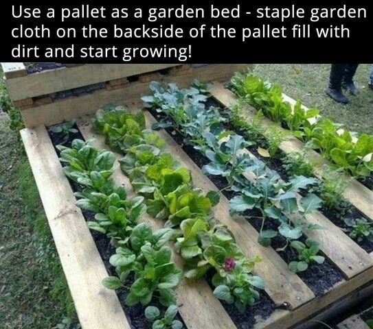 Pallet garden, would make a cool raised bed.