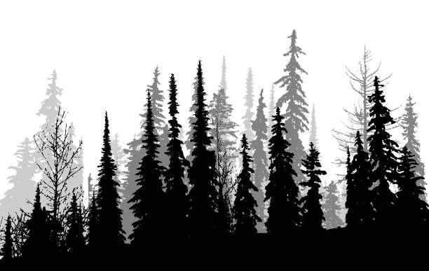 Canadese Pines vectorkunst illustratie   Forest tattoos ...