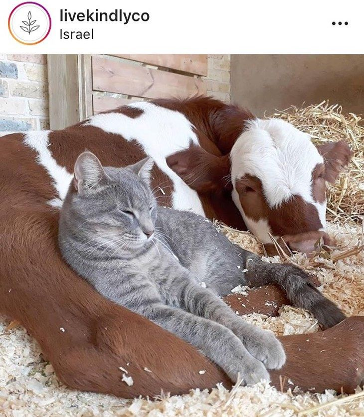 Cat And Cow Such A Good Pairing We Re Not Open Mondays But We Ll Be Back Tues Sun 11a 8 10p To Create Some Awesome Pa Animals Friendship Animals Cute Animals