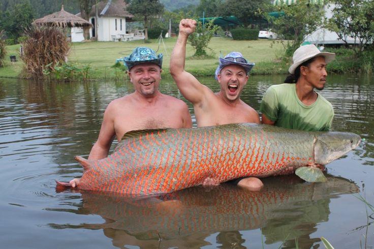 Stor fisk fångad i Thailand!