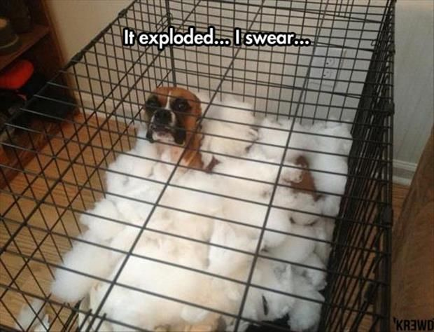 19 Dogs and Cats That Aren't Any Good at Lying
