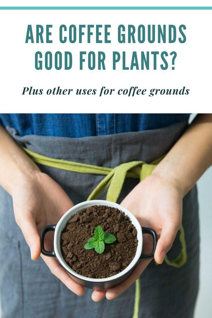 12 Houseplants You'll Regret Plant care houseplant