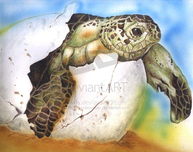 Turtle by devil-undercover on DeviantArt