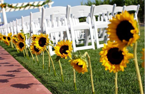 #sunflower aisle