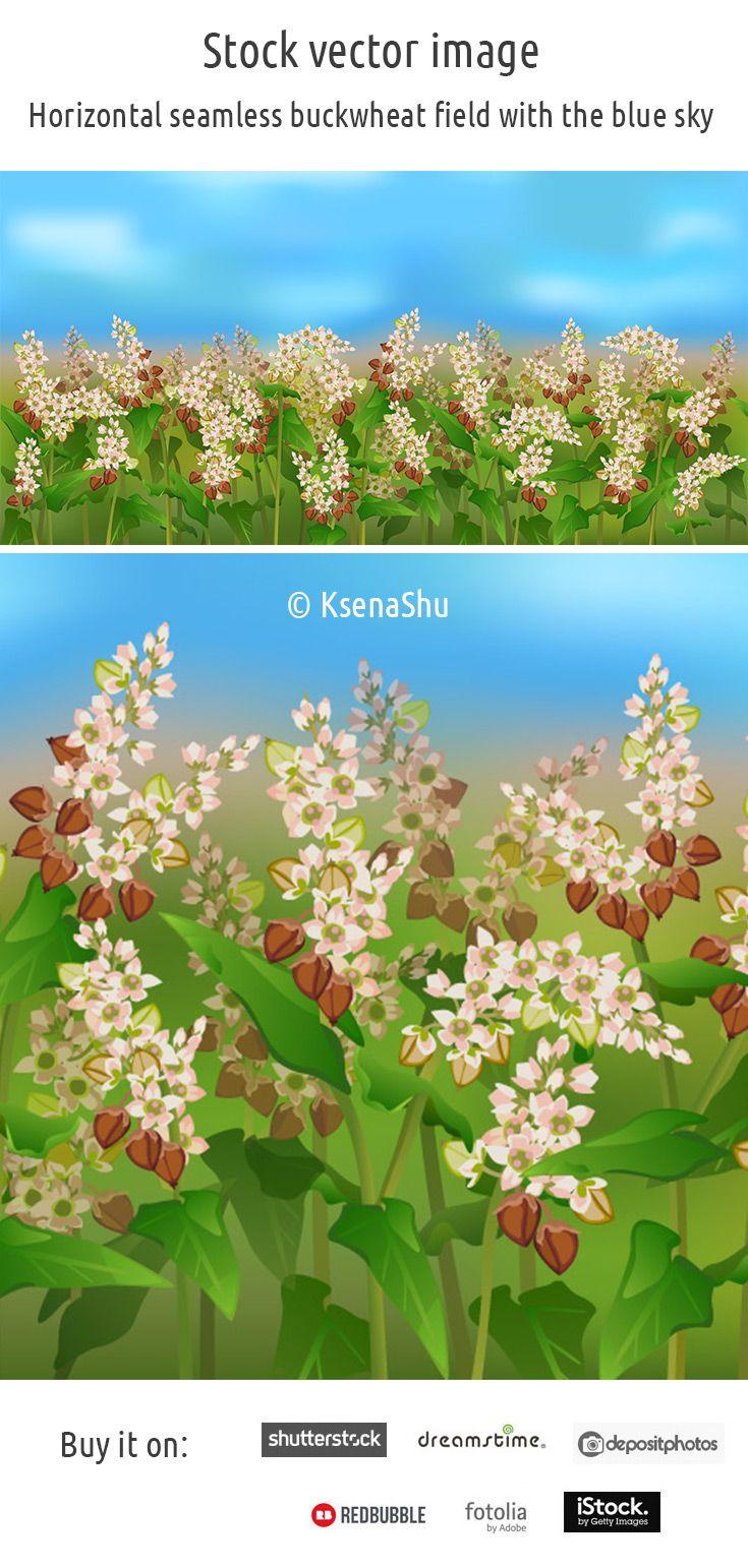 Horizontal seamless buckwheat field with the blue sky #stock #vector #buckwheat #healthyfood #cereal #seamlesspattern