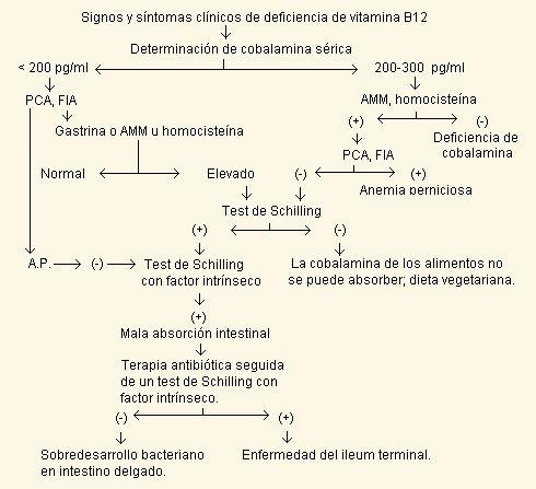 VITAMINA B12 -Análisis Clínicos - Infobioquímica