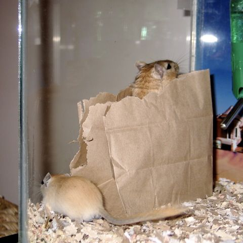 brown paper bags. How more a simple toy for a gerbil.