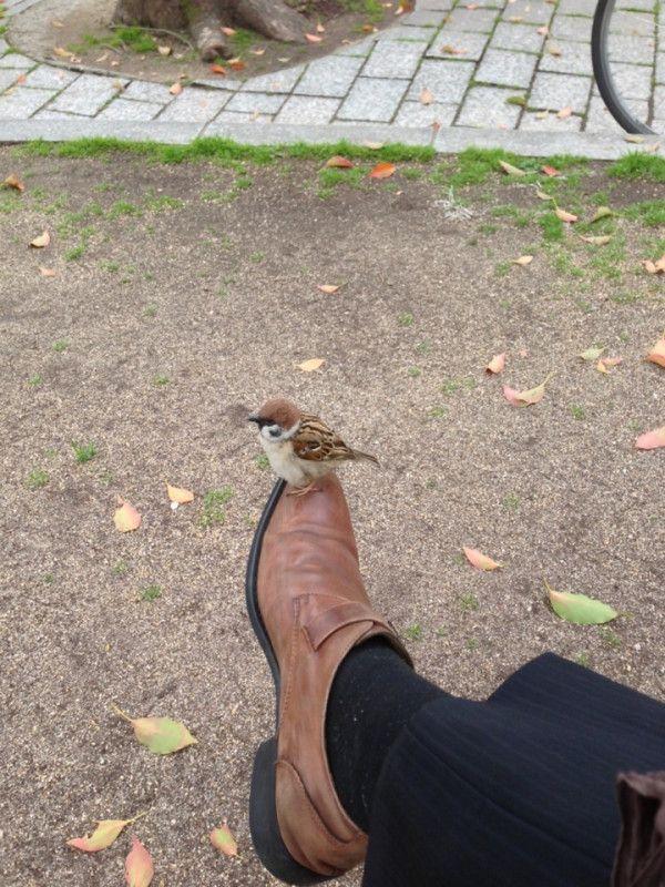 「よりに寄ってなぜこんな靴の時に…」と嘆く夫を「ピカピカの靴だったらこんな可愛いミラクル起きなかったと思うよ」となぐさめる