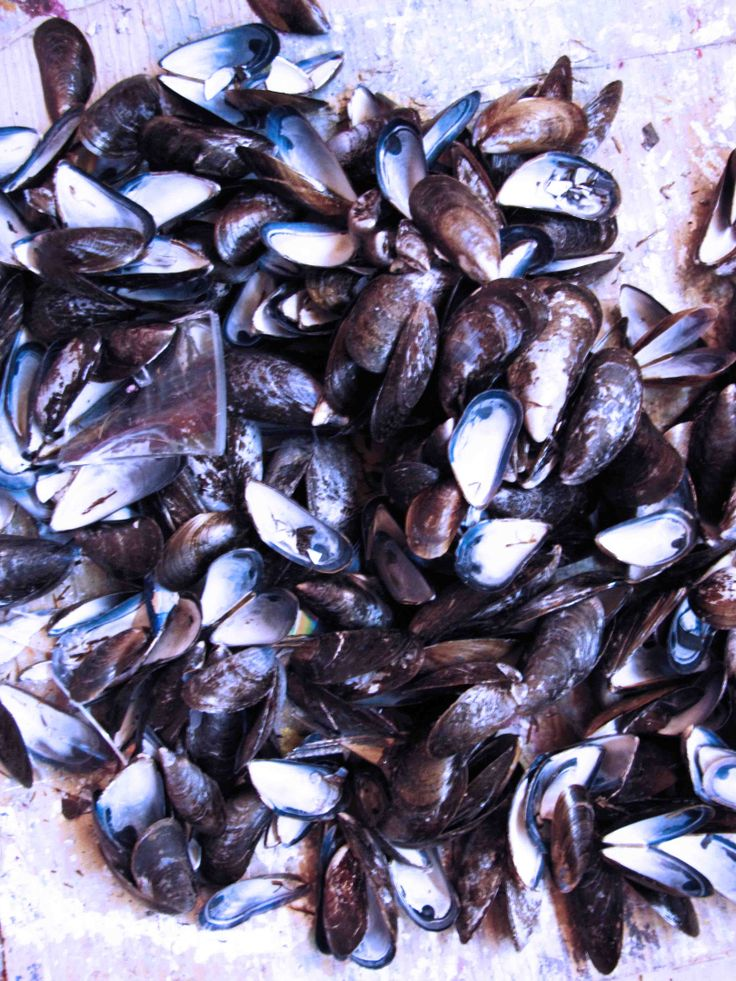 mussels //inspiration