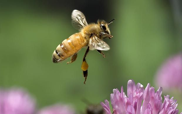 Einstein was right - honey bee collapse threatens global food security