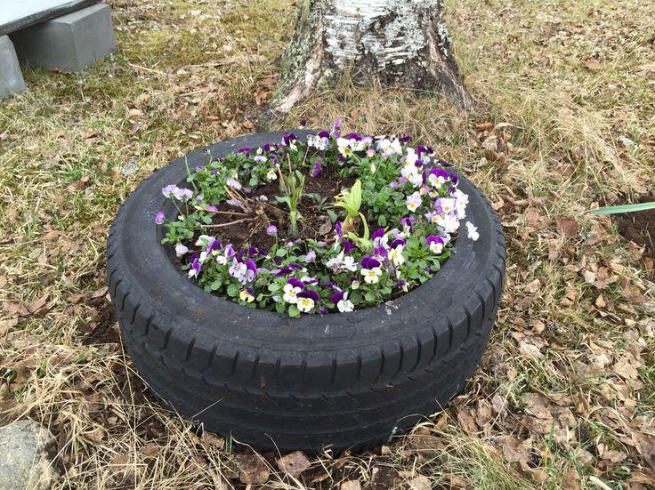 """Ett gammalt däck har blivit en """"mobil"""" blomlåda"""