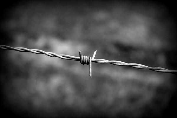 """""""Barbed Wire"""" Beth Vincent Photography"""