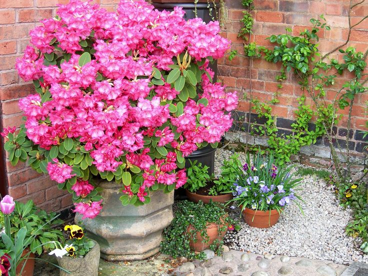 23 best images about chimney pot planting on gardens pedestal and planters