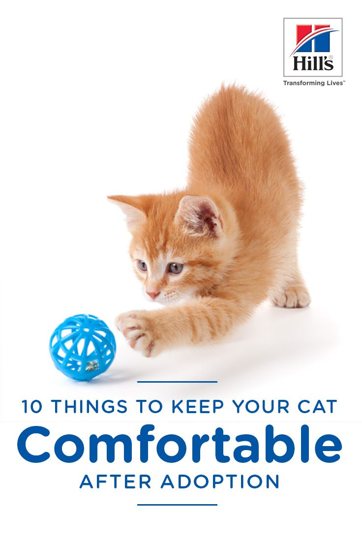 10 Things To Do When Adopting A Cat Hill S Pet Cats Cat Adoption Cat Parenting