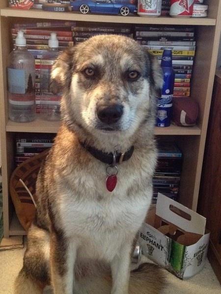 Help find a stolen dog!Skin Industrial, Seattle Wa, Pets Amber, Animals Pets, Helpful Finding, Stolen Dogs, Amber Alert, Fur Industrial