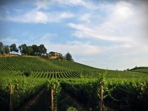 Vineyard and villa