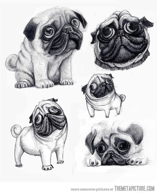 A pug's caricature looks just like the real dog…