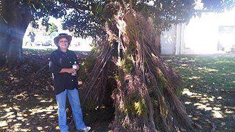 traditional south australian noongar people's bush shelter - Kaunt
