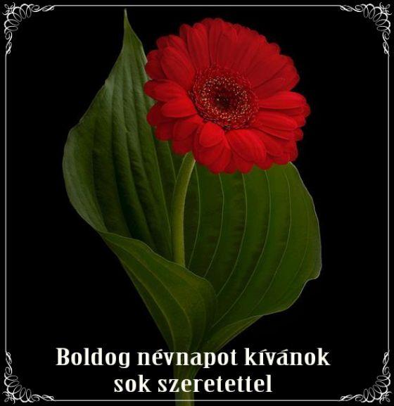 névnap, szöveges, képeslap, virágok, köszöntő,