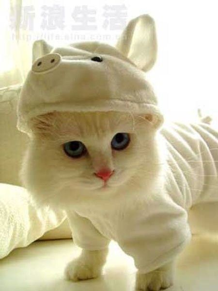 It's ok...it's ok...that IS one of the cutest blue eyed, pink nose kitteh's ever dressed as a piglet. Howevs, it looks as if kitteh's not amused. oxox