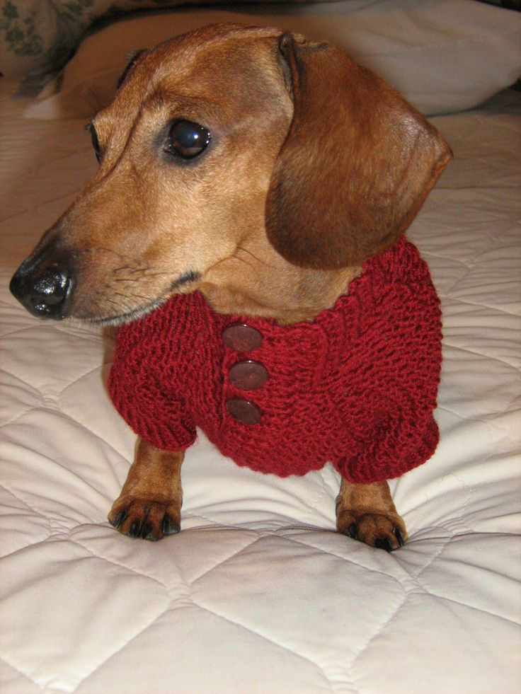 1770 Best I Love My Wiener Dog Images On Pinterest