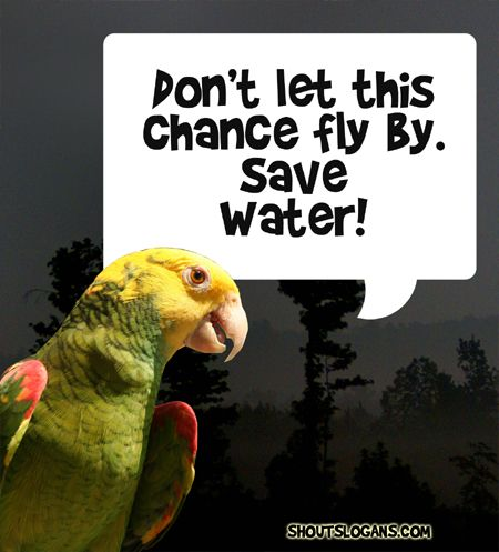Don't let this chance fly by, Save Water!