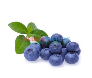 Picture of Bilberry