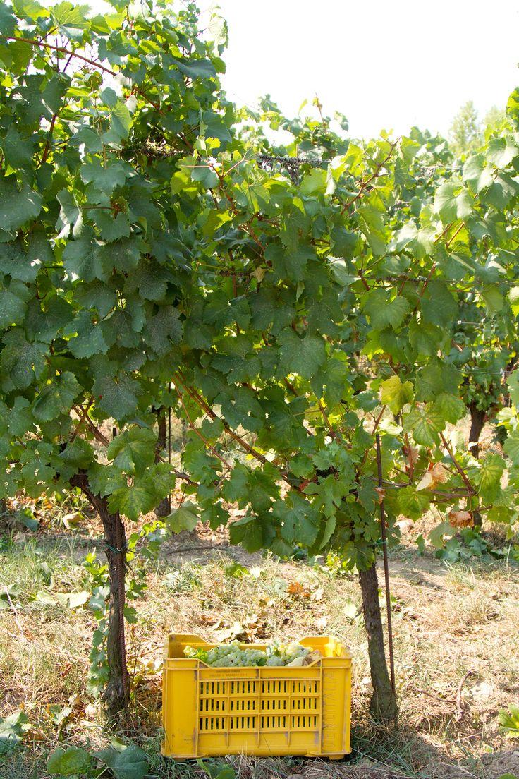 Finding Franciacorta: The Best Italian Wine Region You've Never Visited   @saltandwind   www.saltandwind.com