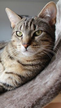 Latest Animal Cat Cats Mo Animal Cat Cats Mobile Wallpaper 1