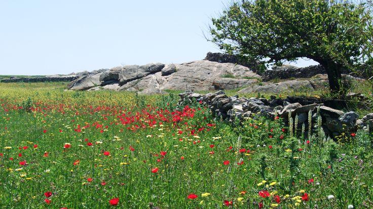 Springtime Greece