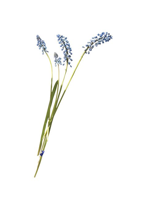 Brides.com: A Glossary of Wedding Flowers by Color. Muscari. An all-muscari bouquet is chic and ladylike. It also comes in purple and white.  Browse more muscari wedding flower ideas.