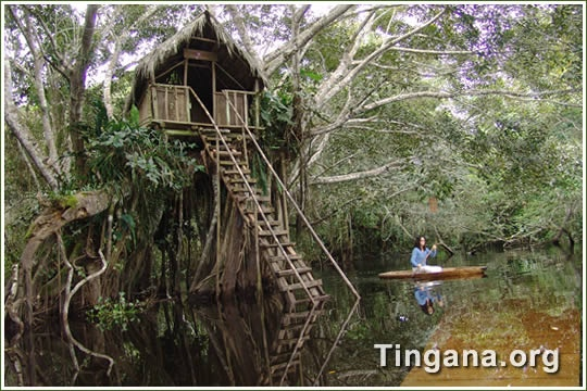 Site about Tingana wildlife and canoe trips near Moyobamba in Alto Mayo, San Martin, Peru should be coming soon with information and photos.