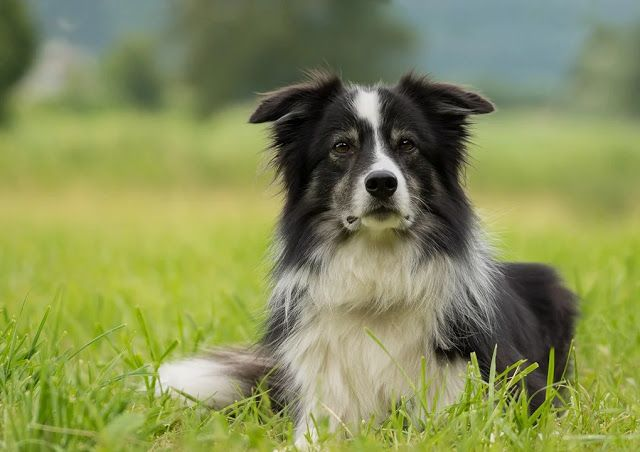 10 Healthiest Dog Breeds With Few Medical Issues The Buzz Land
