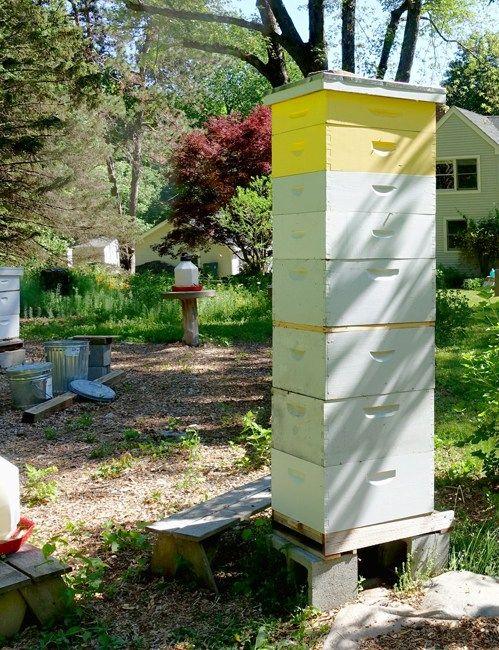 Averticaltwoqueensystem Bee keeping, Bee hive, Honey bee