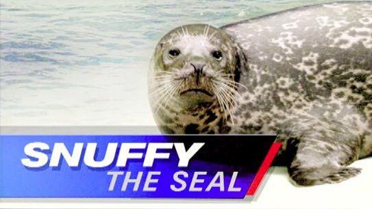 Snuffy the Seal und die Shark Week - Mit Snuffy the Seal – einer süßen kleinen Robbe – schockierte der US-amerikanische Dokumentationssender Discovery Channel anno 2013 seine Zuschauer.
