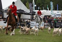 Hunting and Hounds | gamefair.co.uk