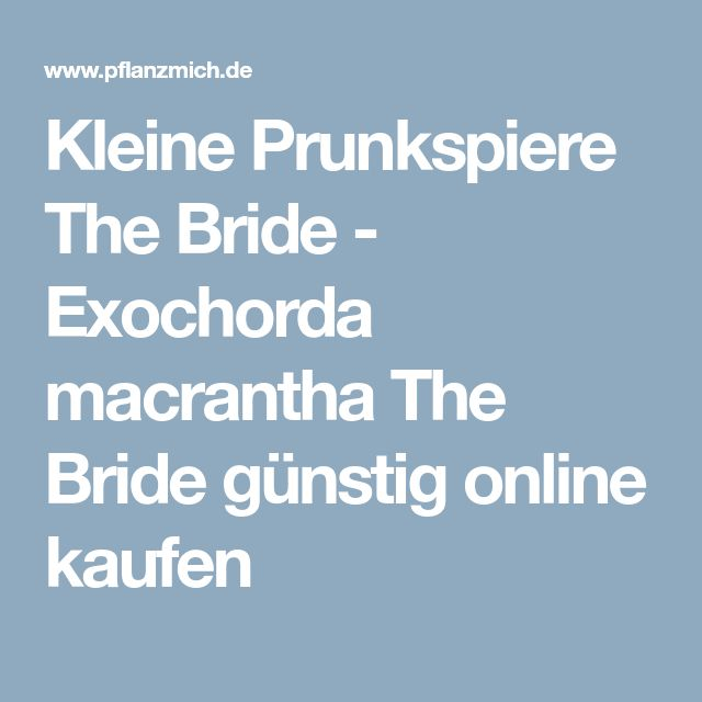Kleine Prunkspiere The Bride Wolle kaufen, Günstig und