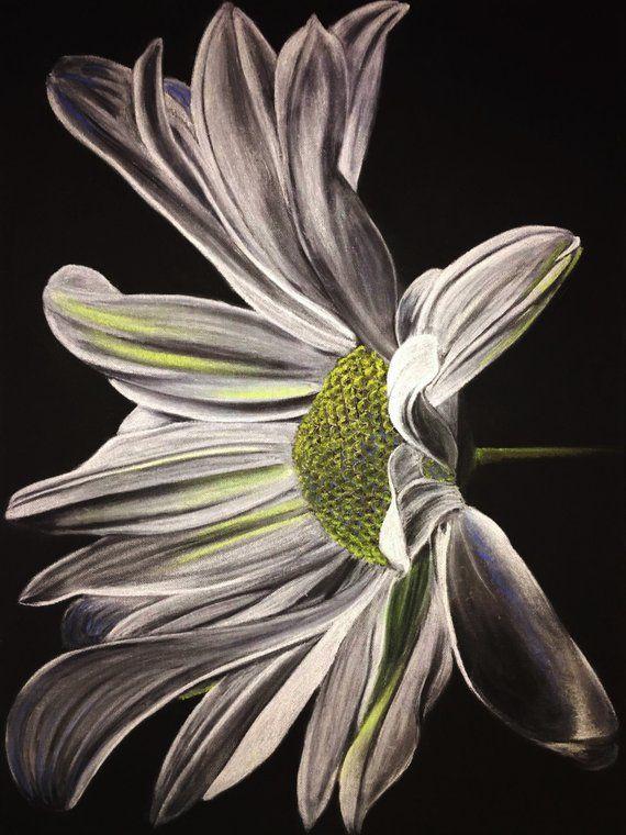 Awakening Daisy 2015 White Charcoal And Pastels On Black Canvas