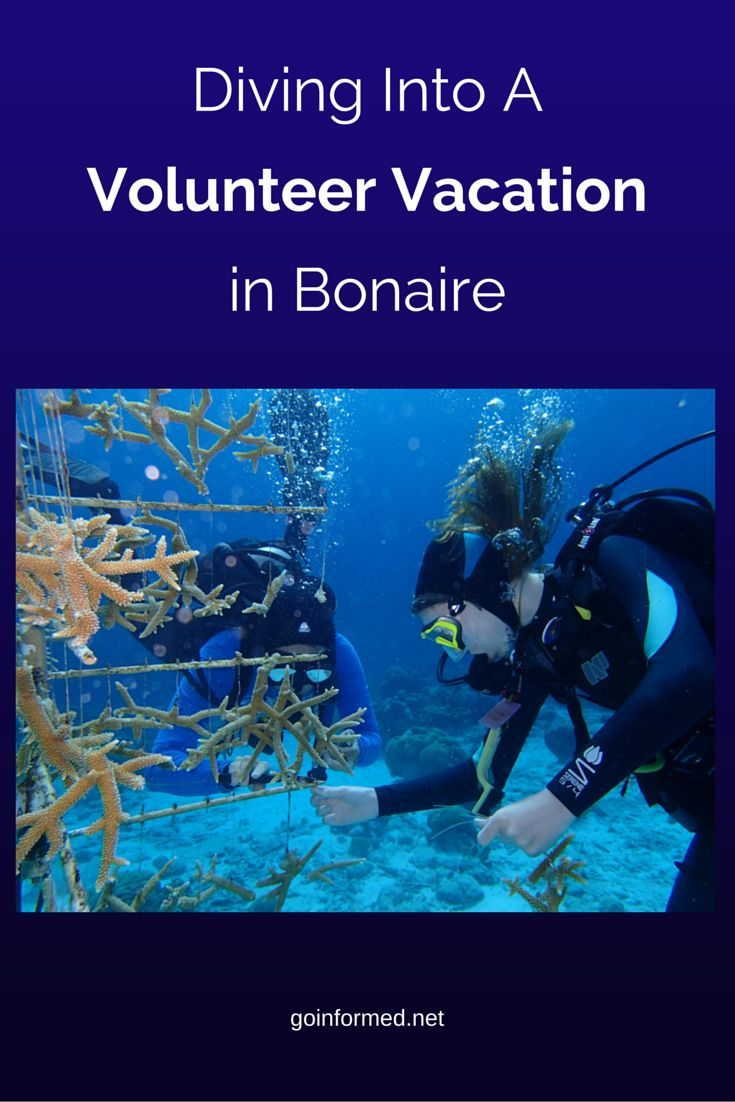 Scuba diving in Bonaire? Volunteer to help Coral Restoration Foundation restore the reef. Read about it in this post on goinformed.net