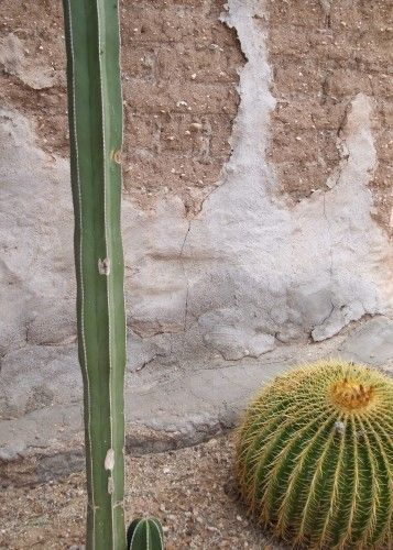 Tanque Verde Guest Ranch in Tucson. Cactus and adobe contrast. From A Traveler's Library