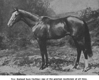 New Zealand born Carbine—one of the greatest racehorses of all time.