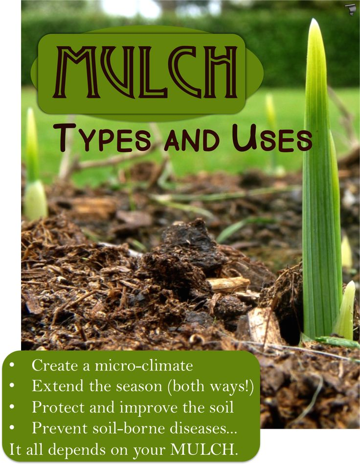 114 best images about mulch on pinterest gardens leaves for Soil borne diseases