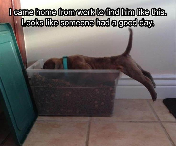20 Funny Animal Pictures for Today