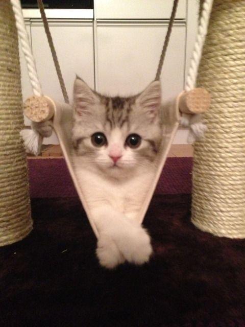 うちの猫が金魚狙ってるんだが