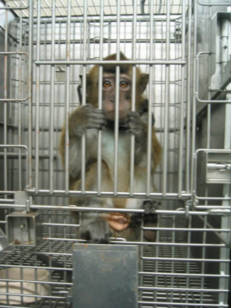 Floridians are fighting back against monkey-breeding facilities and what they may be doing behind closed doors.