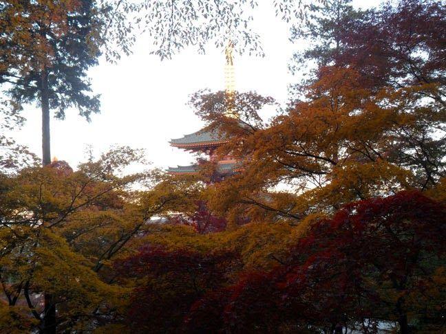 Autumn Leaves at Takahata-Fudoson Temple