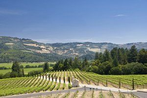 A região que reúne os renomados vales do Mapa e Sonoma surpreende todas aquelas que gostam de boa comida, vinhos especiais e atividades ao ar livre. Para curtir melhor o passeio, alugue um carro e conheça todas as vinícolas da região, conheça vinicultores e aproveite todos os prazeres que uma boa refeição pode proporcionar. Com certeza você irá achar uma das regiões mais bonitas dos Estados Unidos.